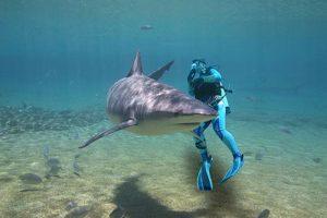 Shark Diving Cabo San Lucas