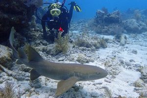 Best Time for Shark Diving in Cabo